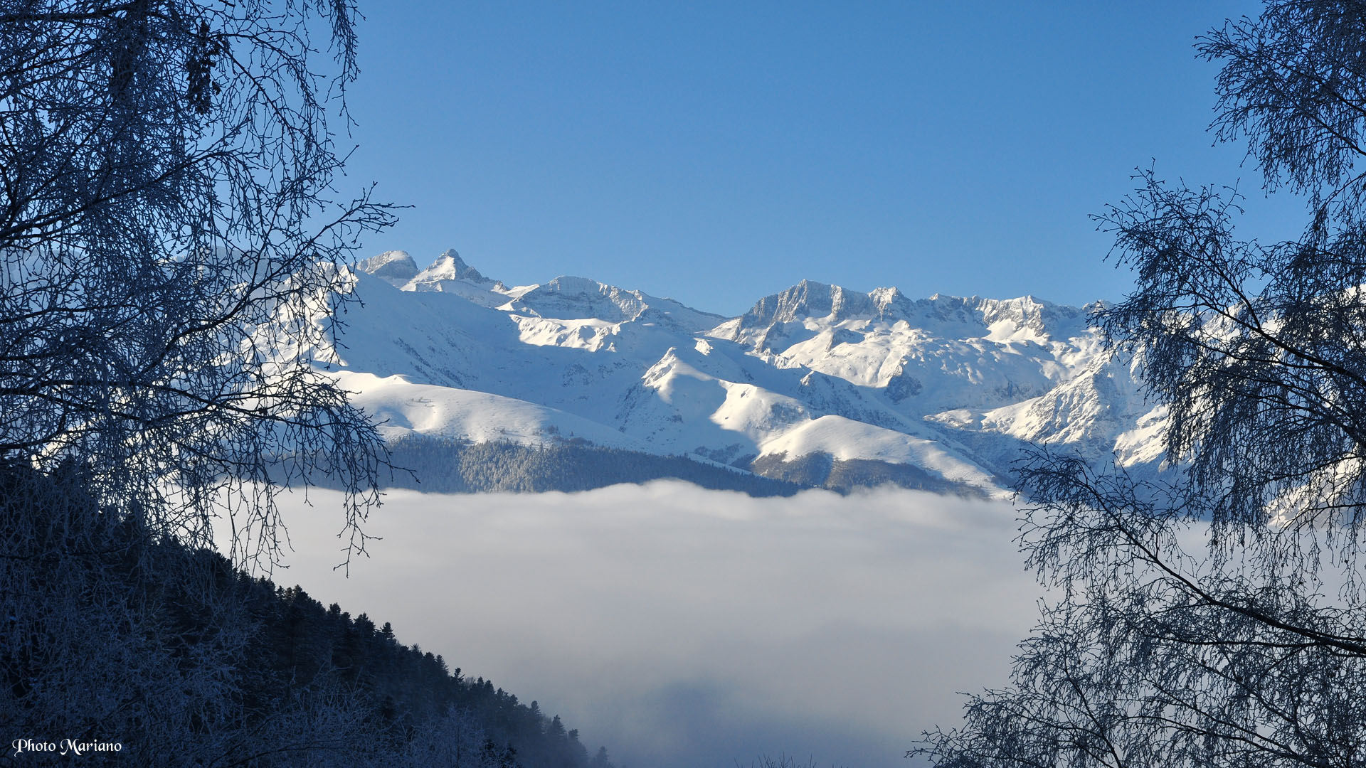 pin paysages montagne fond - photo #10