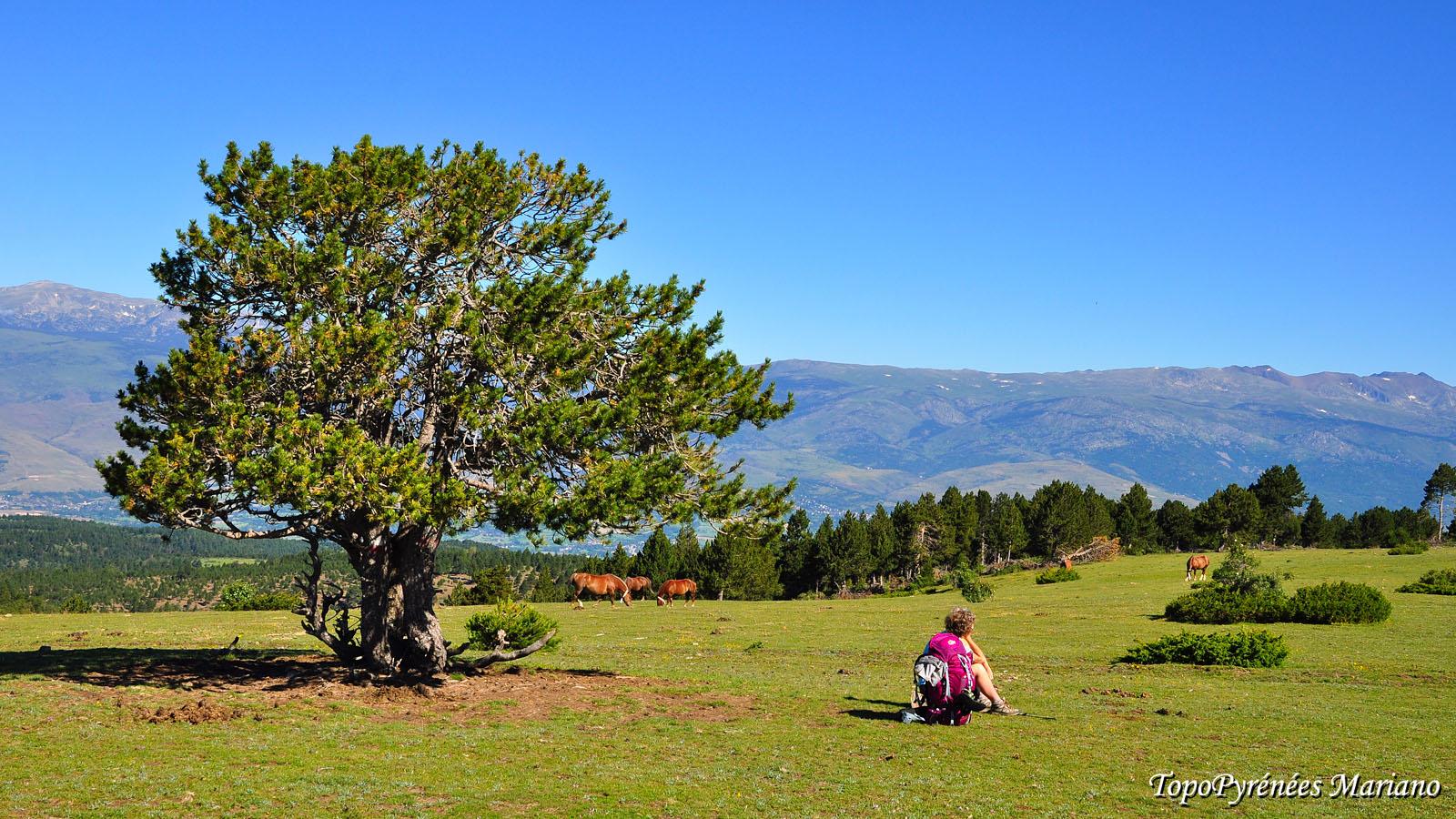 Traversée des Pyrénées 31em Etape (Camping Las Asperas – Camping Can Fosses de Planoles)