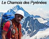 Lien-Chamois-des-Pyrenees
