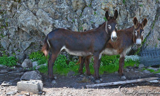 Randonnée aux Arenaygues et aux Pierres Gravées (en vallée d'Ossau)