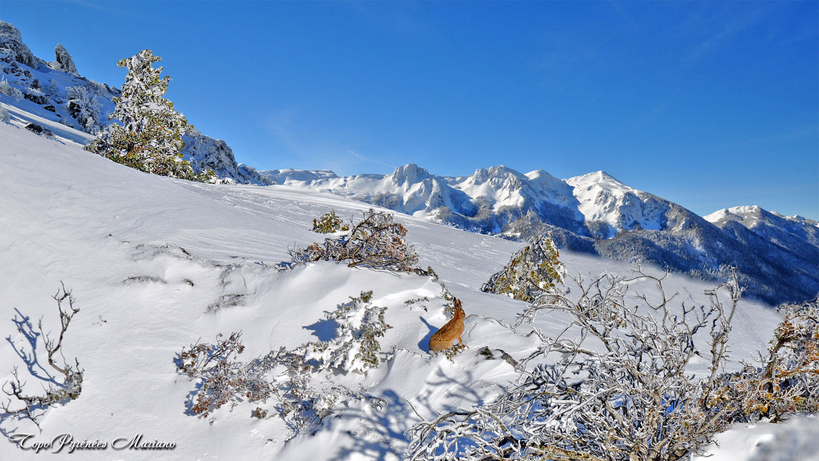 Article-Vallee-d-Ossau-hiver_045