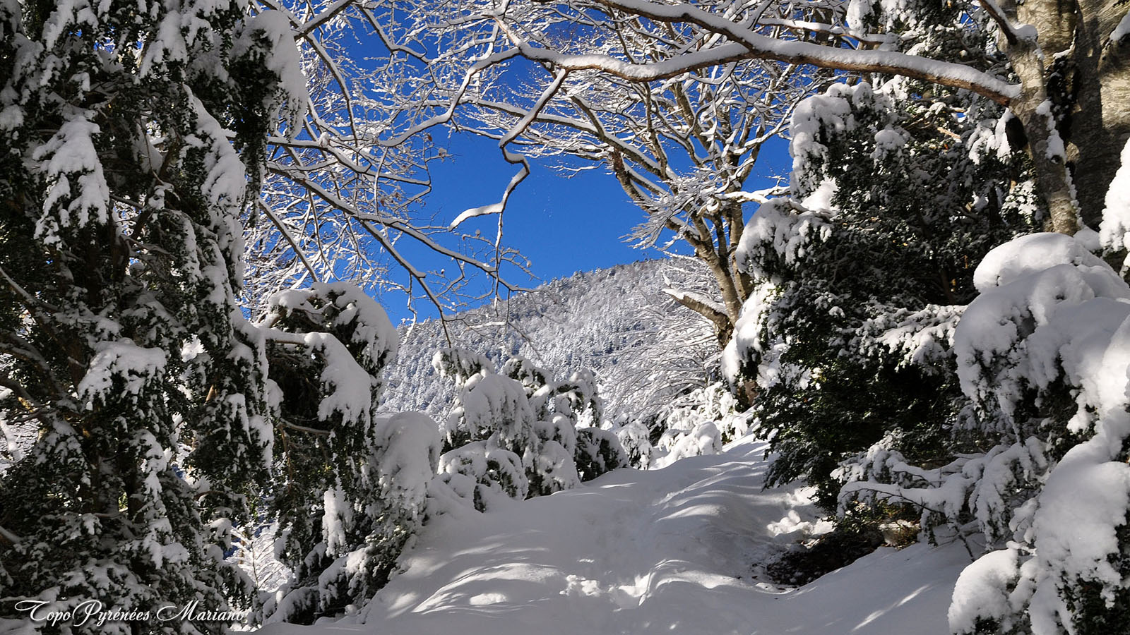 Article-Vallee-d-Ossau-hiver_052