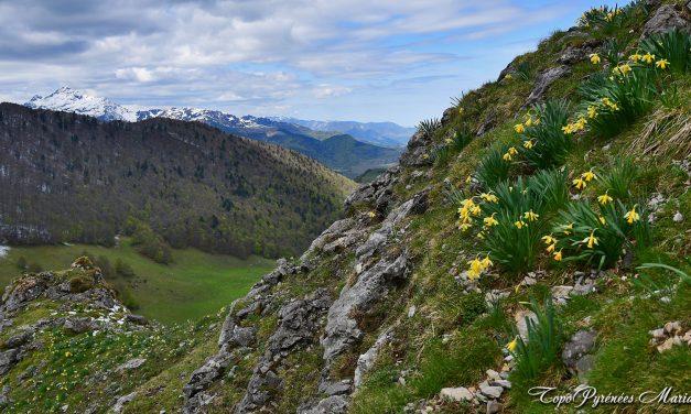 Randonnée Casque du Lhéris (1595m) depuis Bernadaus