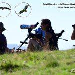La migration des rapaces dans les Pyrénées