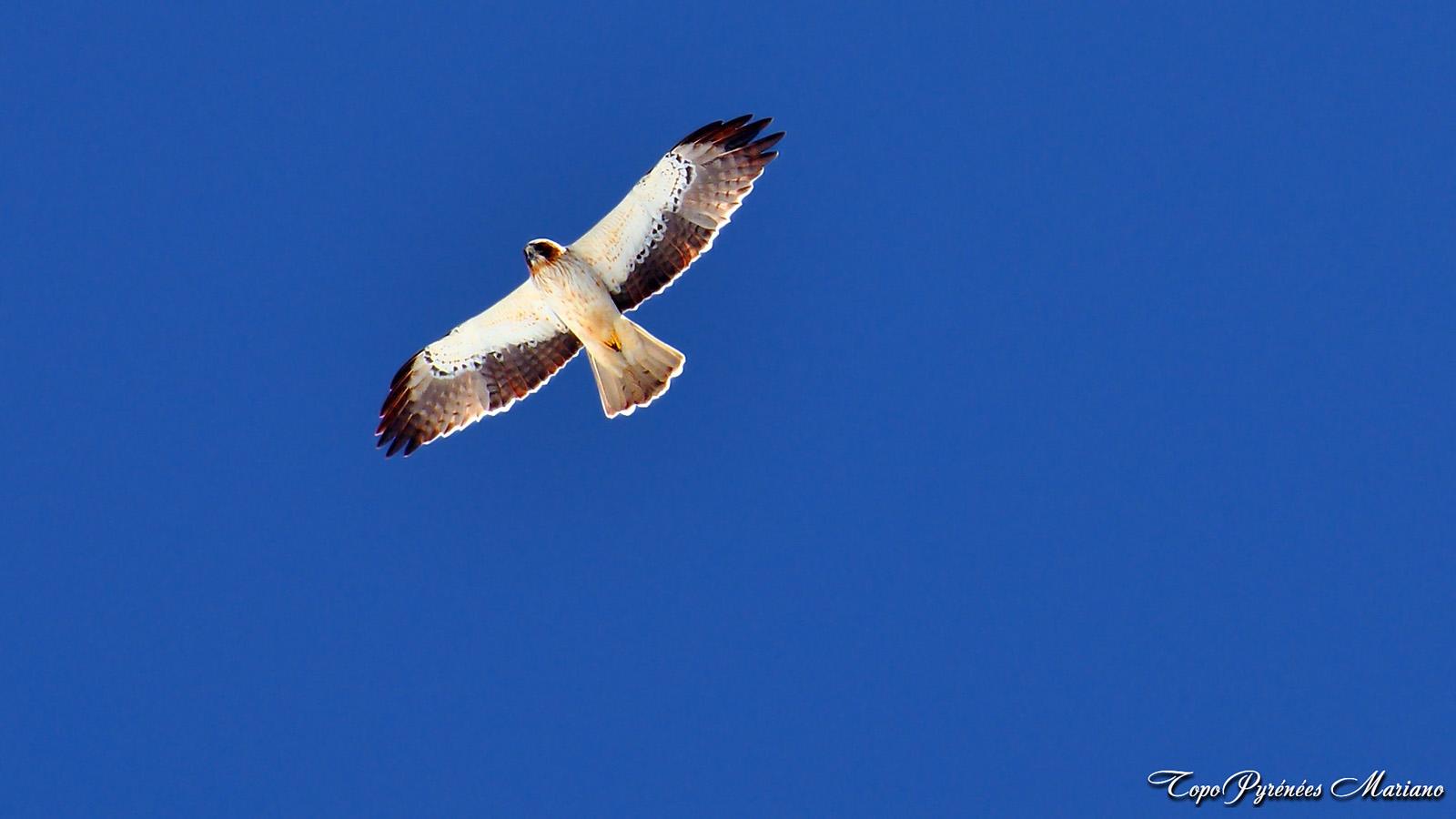 Aigle – Les Topos Pyrénées par Mariano
