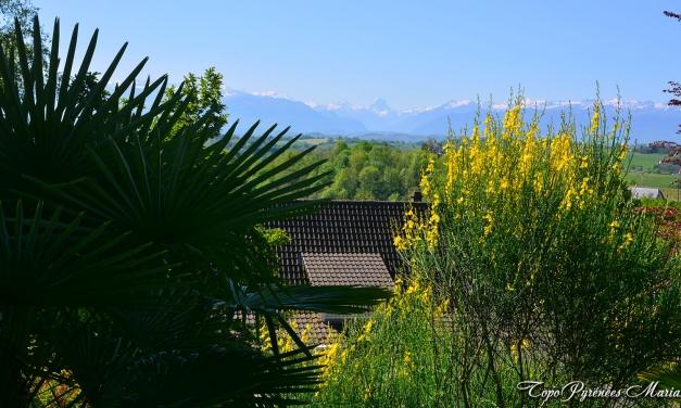 Randonnée sur les Coteaux de Jurançon
