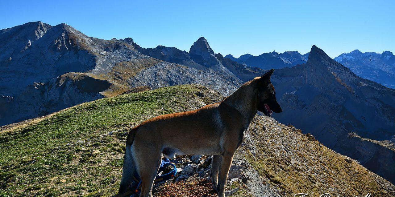 Randonner avec son chien dans les Pyrénées